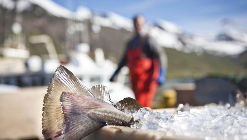 pesca islanda
