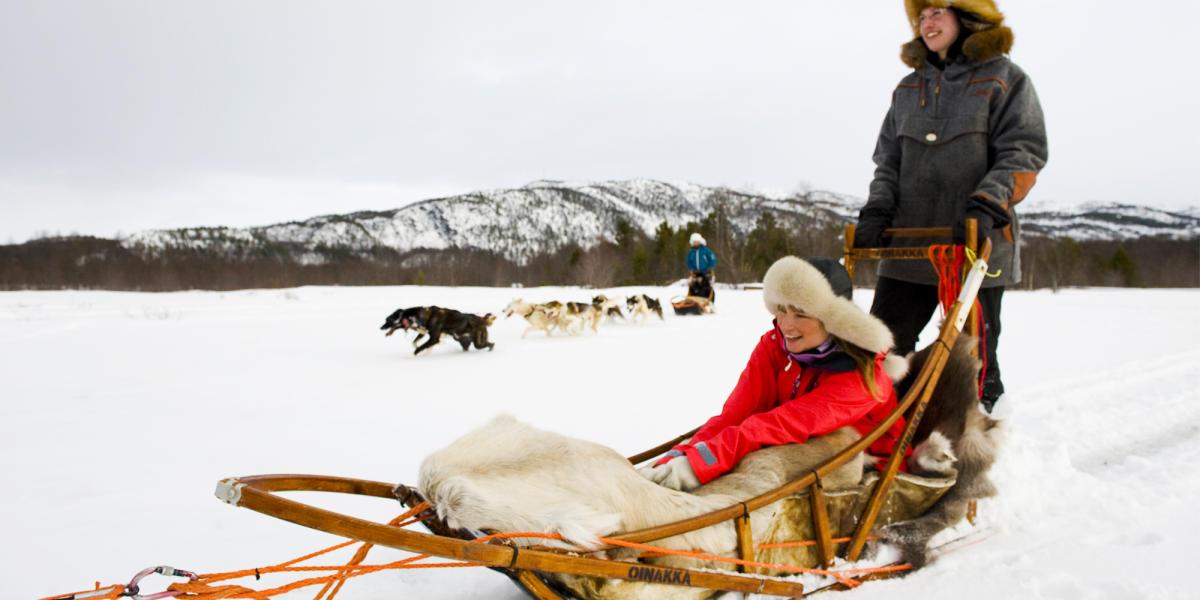 sleddog norway