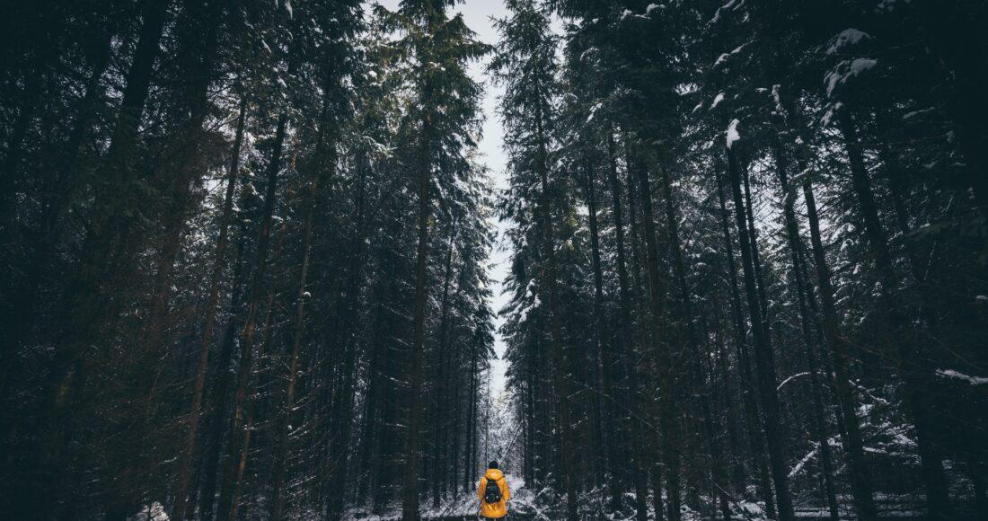 traveller forest